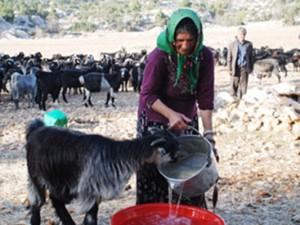 keçi ve kadın
