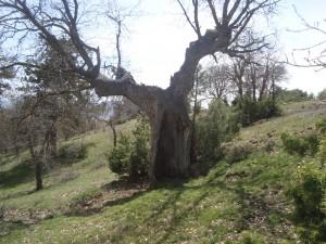 Dedeler Ormanı- Çevre Pınarı Köyü